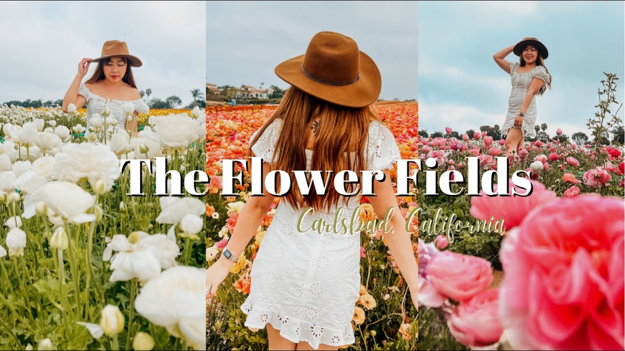 The Flower Fields at Carlsbad San Diego California Travel Guide + Photo Tips